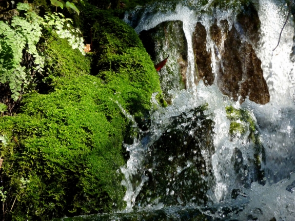 agua_y_musgo_alhambra